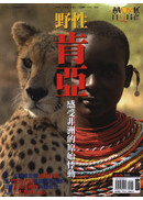 野性•肯亞